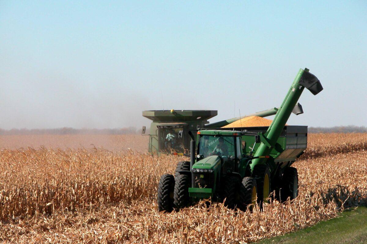 http://secureservercdn.net/198.71.233.129/3zp.bf9.myftpupload.com/wp-content/uploads/2019/11/Corn-harvest-1200x800.jpg